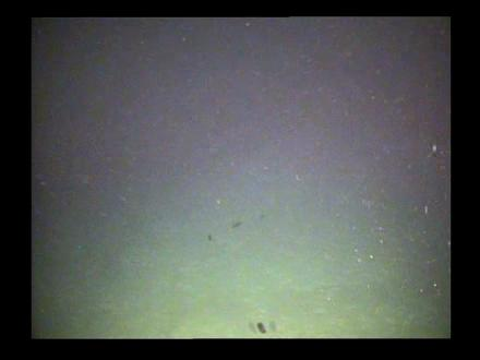 Video shot at a depth of  2,500 - 3, 000 metres  Video